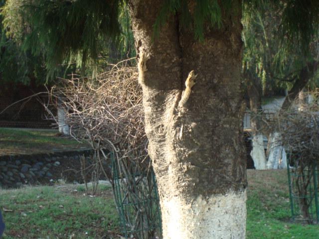 Ein indisches Eichhörnchen (gestreift und sehr zutraulich)